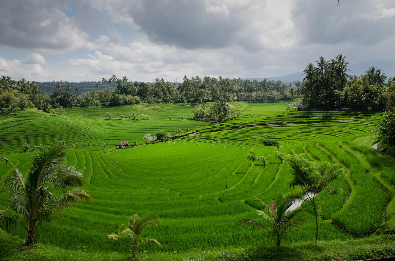 Amazing Bali Nature